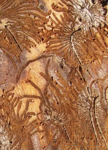 Bark Beetles, Photo (c) Smithsonian Institution
