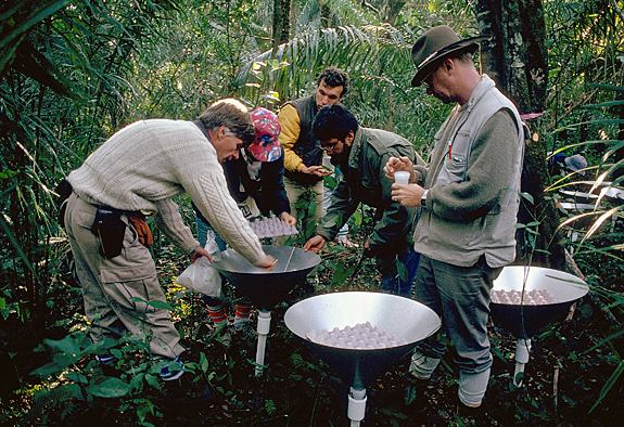 Terry Erwin and his team collect insects