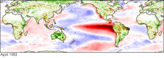 Sea surface temperature conditions during an El Niño event